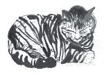 Ink painting of sleeping tabby cat. This image available as a notecard